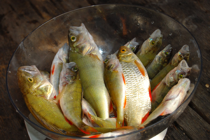рыбалка на бакланово видео